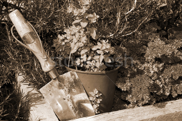 stainless steel garden trowel in sepia Stock photo © morrbyte