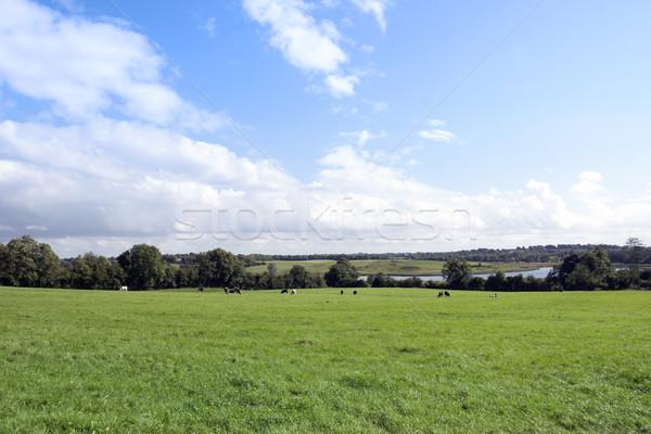 Weelderig groene velden platteland hemel Stockfoto © morrbyte