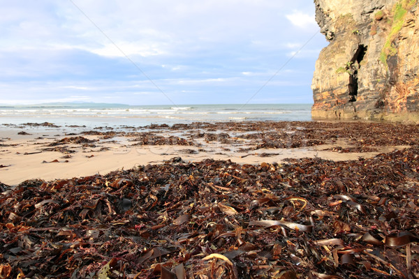 ballybunion beach cliff sea kelp Stock photo © morrbyte