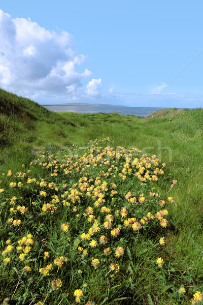 wild wild flowers Stock photo © morrbyte