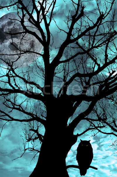 owl perched in ancient tree on moonlit night Stock photo © morrbyte
