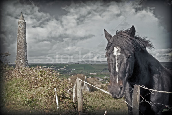 Irlandais sombre cheval anciens tour belle Photo stock © morrbyte