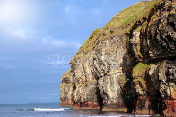 ballybunion beach cliff gulls flying Stock photo © morrbyte