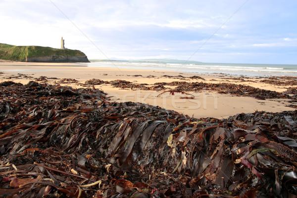 Hínár kilátás tengerpart Írország bőség vihar Stock fotó © morrbyte