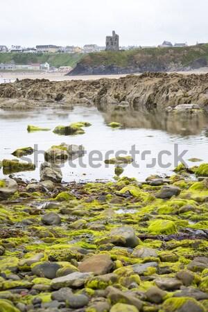 Zamek wodorost pokryty skał widoku Zdjęcia stock © morrbyte