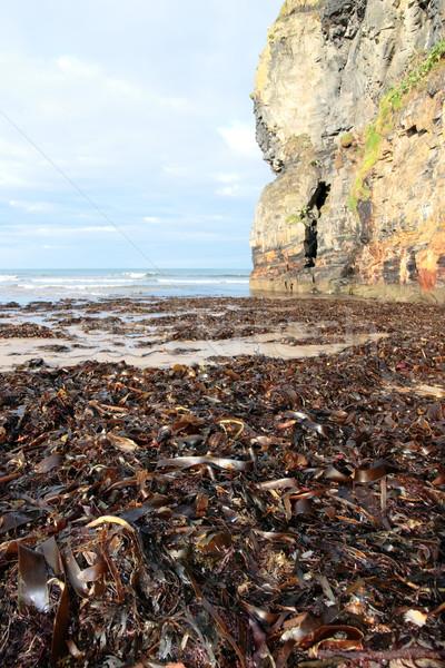 Praia penhasco alga ver Irlanda Foto stock © morrbyte