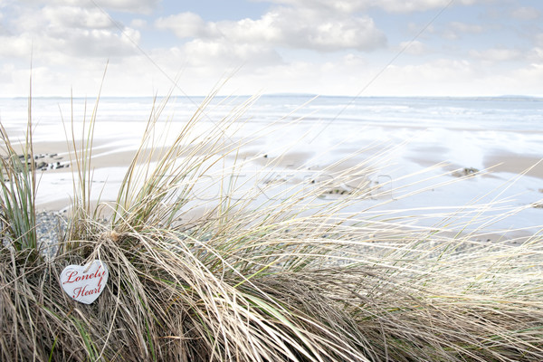 lonely wooden heart on beach dunes Stock photo © morrbyte