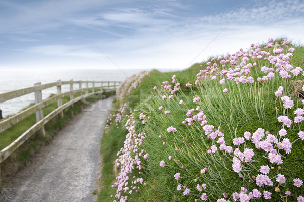 розовый утес ходьбы пути цветы Сток-фото © morrbyte