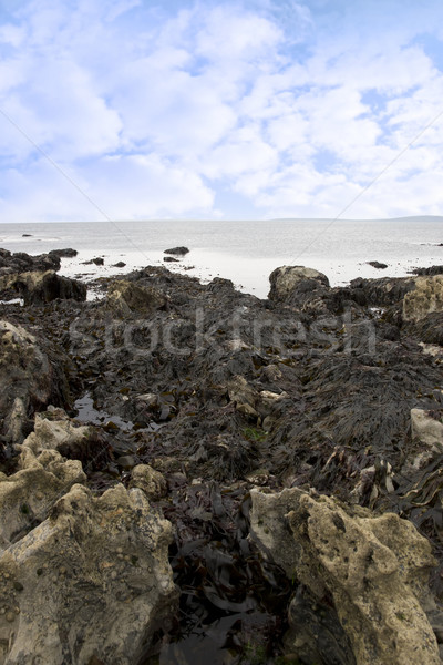Wodorost wiele skał rock plaży niebo Zdjęcia stock © morrbyte