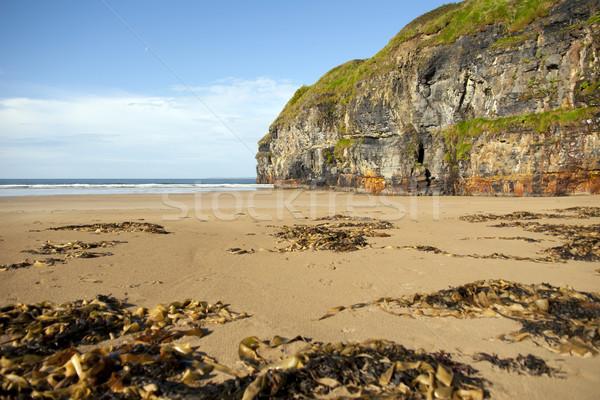 rocky cliffs of Ballybunion on the wild atlantic way Stock photo © morrbyte