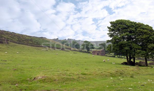 овец пастбище Англии небе дома Сток-фото © morrbyte