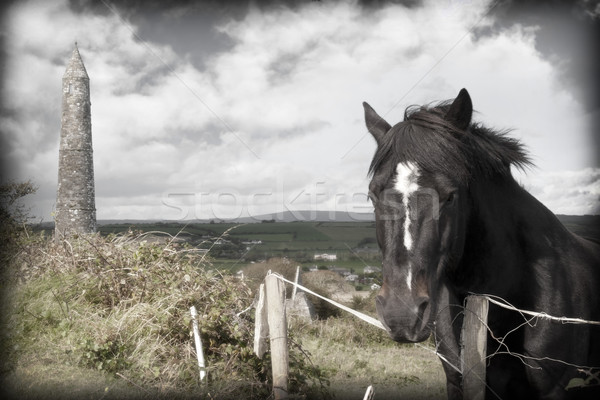 Noir irlandais cheval anciens tour belle Photo stock © morrbyte