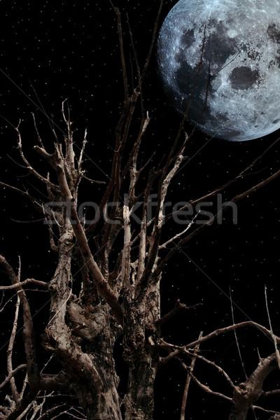 Arrepiante árvore velho antigo lua cheia céu Foto stock © morrbyte