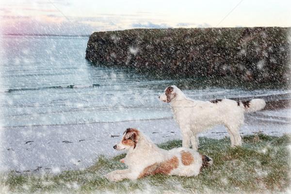 Tengerpart kilátás kettő kutyák naplemente égbolt Stock fotó © morrbyte