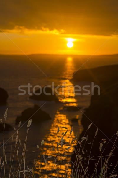 Bella tramonto rocce selvatico erba Foto d'archivio © morrbyte
