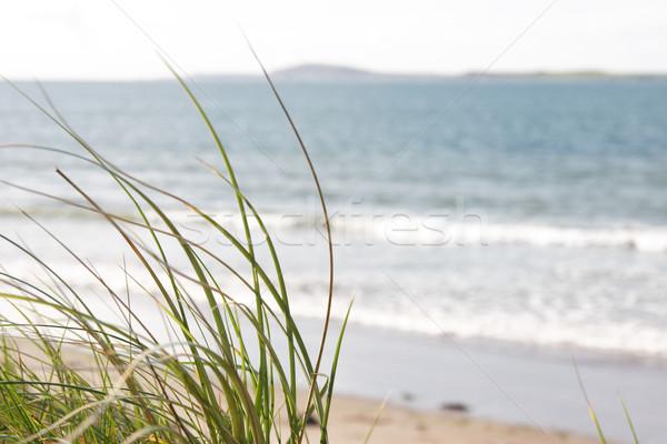 Erba view alto sabbia spiaggia Foto d'archivio © morrbyte