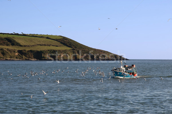 Połowów mewy domu wody chmury ocean Zdjęcia stock © morrbyte