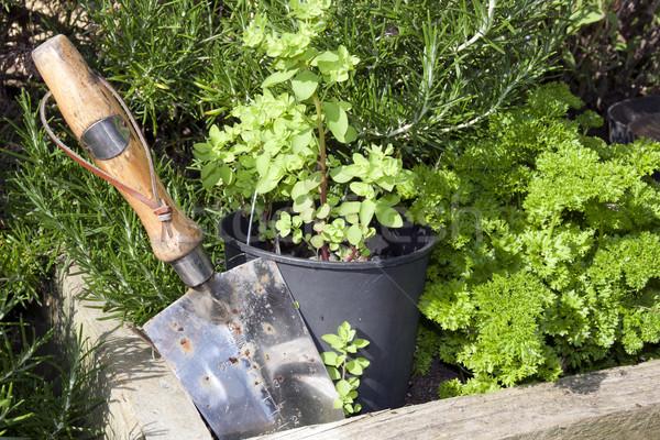 stainless steel garden trowel Stock photo © morrbyte