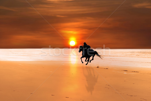 silhouette of a horse and rider galloping Stock photo © morrbyte