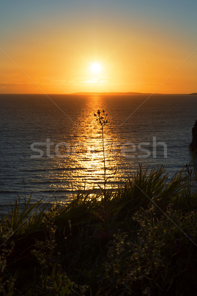 beautiful sunset over the wild tall gras Stock photo © morrbyte