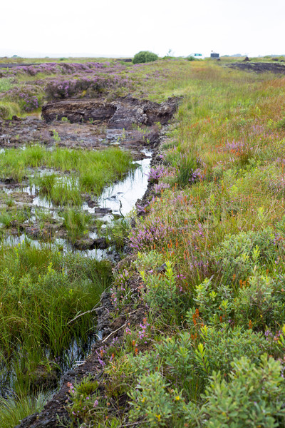 風景 方法 アイルランド 水 ツリー ストックフォト © morrbyte
