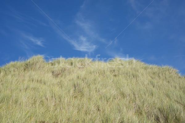 large green sand dunes Stock photo © morrbyte