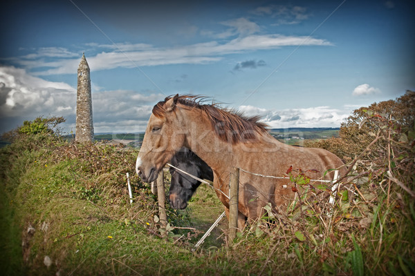 couple of grazing Irish horses and ancient round tower Stock photo © morrbyte