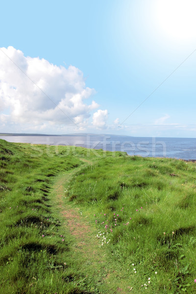wild grass path Stock photo © morrbyte