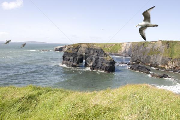 девственница рок Чайки мнение Ирландия Сток-фото © morrbyte
