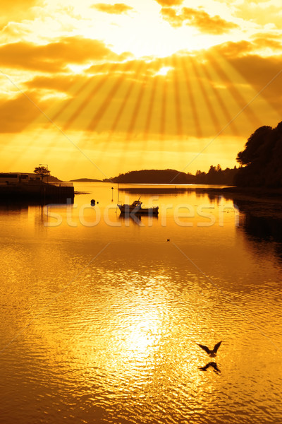 warm orange silhouette of boat and birds at sunset Stock photo © morrbyte