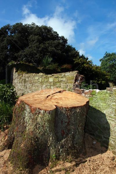 Zdjęcia stock: Drzewo · starych · tekstury · ściany
