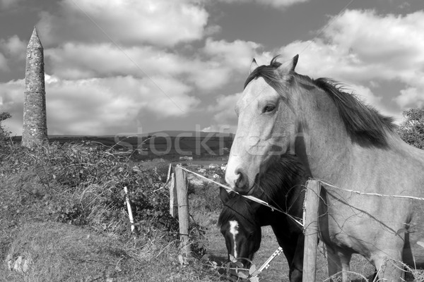 black and white Irish horses and ancient round tower Stock photo © morrbyte