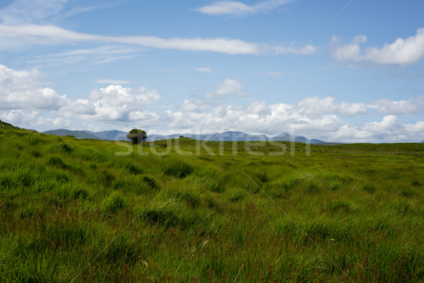 牛 緑 風景 表示 美しい ハイキング ストックフォト © morrbyte