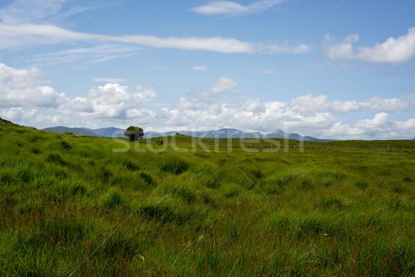 Bovins vert paysage vue belle randonnée Photo stock © morrbyte