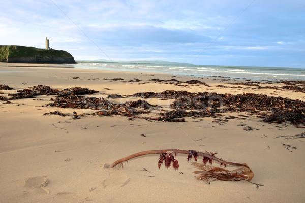 ストックフォト: ビーチ · 海藻 · 表示 · アイルランド · 豊富 · 嵐