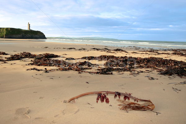 Strand zeewier Ierland overvloed storm Stockfoto © morrbyte