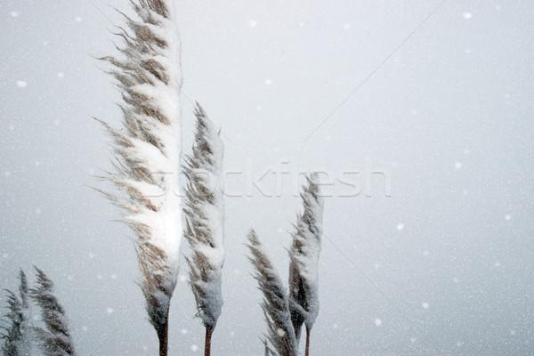 Coperto texture natura panorama neve sfondo Foto d'archivio © morrbyte