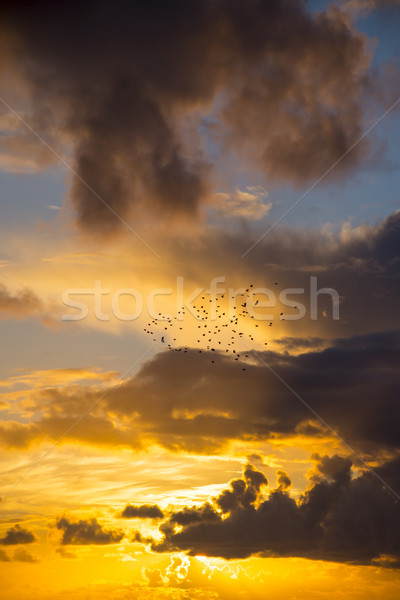 Brilhante laranja pôr do sol céu voador Foto stock © morrbyte