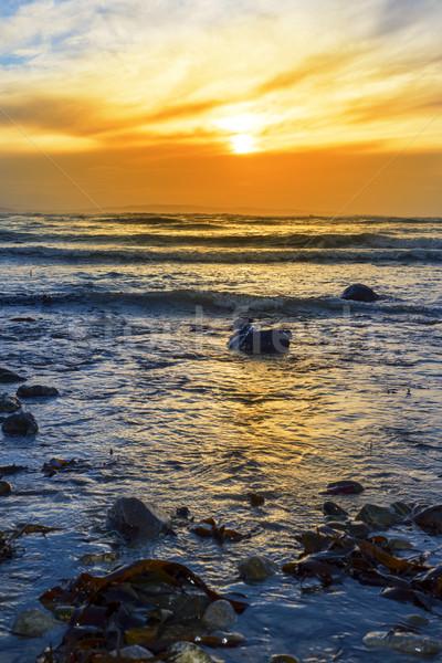 kelp at rocky beal beach Stock photo © morrbyte