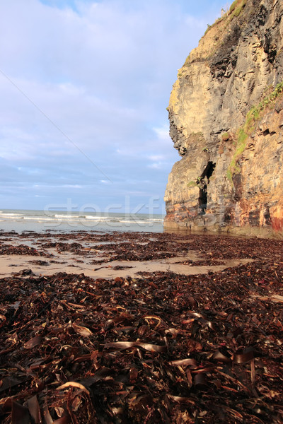 Sziklák hínár kilátás tengerpart Írország bőség Stock fotó © morrbyte