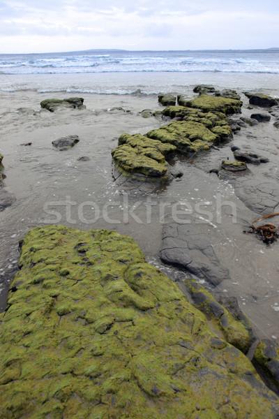 Verde fango rocce banche ovest costa Foto d'archivio © morrbyte