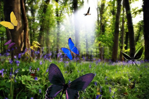 édenkert természet fa tele fény tömeg Stock fotó © morrbyte