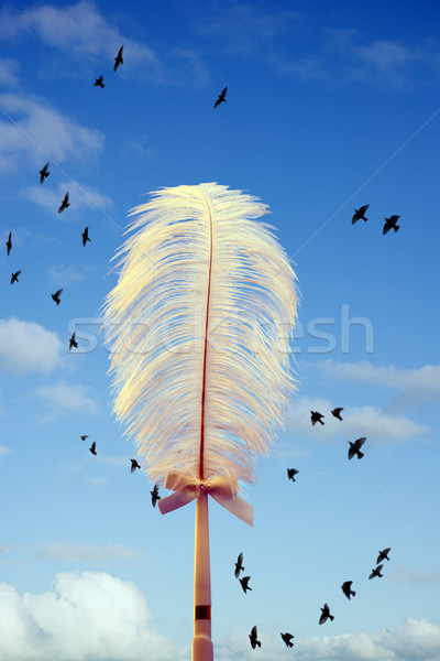 white feather and birds flying Stock photo © morrbyte