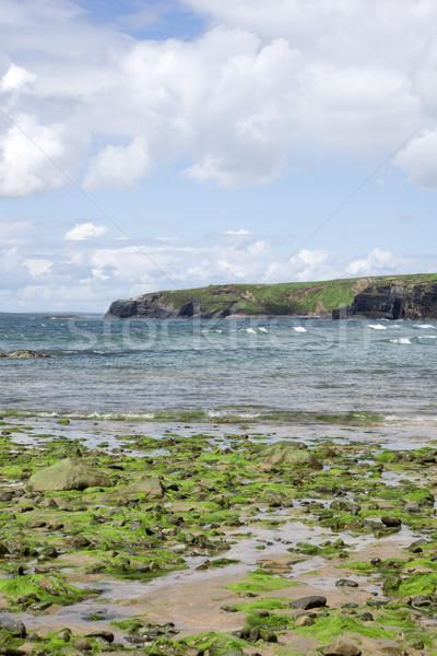 Zeewier gedekt rotsen strand hemel Stockfoto © morrbyte