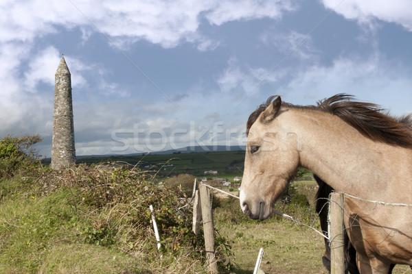 Hermosa castaño negro irlandés caballos dos Foto stock © morrbyte