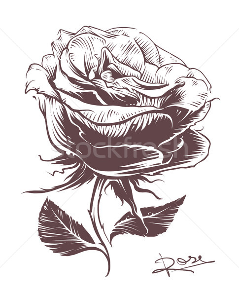 手描き バラ ヴィンテージ スタイル ベクトル 花 ストックフォト © morys