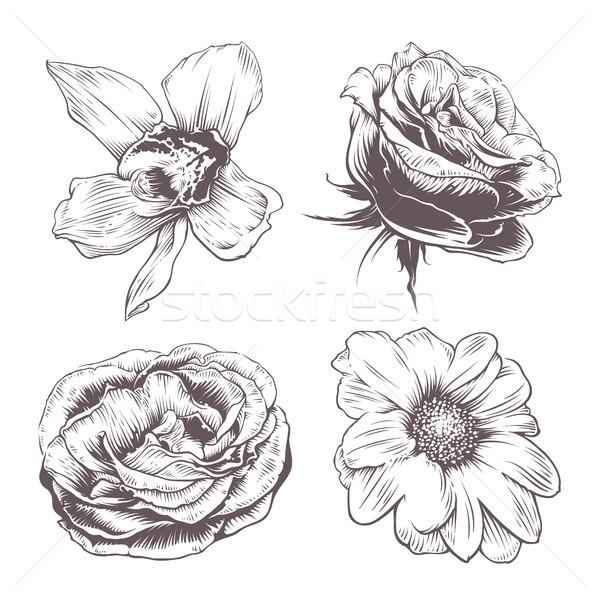 ベクトル 花 セット ヴィンテージ 孤立した 白 ストックフォト © morys