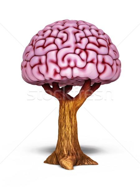 Foto stock: Cerebro · árbol · ilustración · intelectual · crecimiento · de · trabajo
