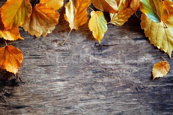 Fallen Leaves Banner Stock photo © mpessaris