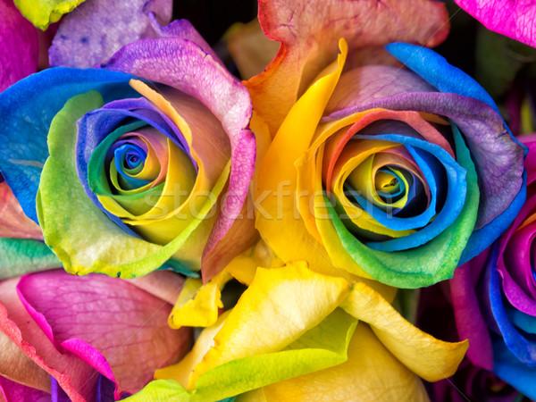 Gökkuşağı güller gül renkli makro Stok fotoğraf © mroz